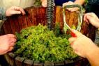 Atelier œnologique avec Vigne Envie